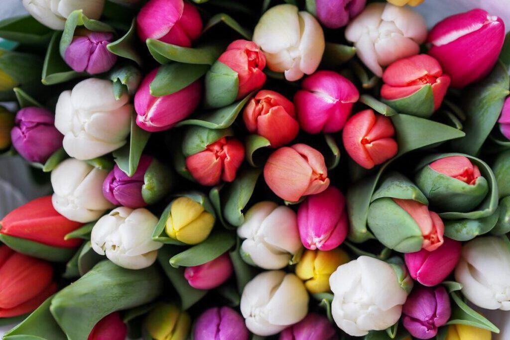Frohe Ostern 2020 wünscht Dagi von Dagis' Nesthäkchen